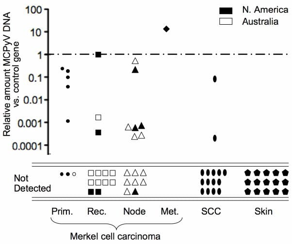 Figure 2 - Marked variability of Merkel cell polyomavirus DNA quantity among MCC tumors