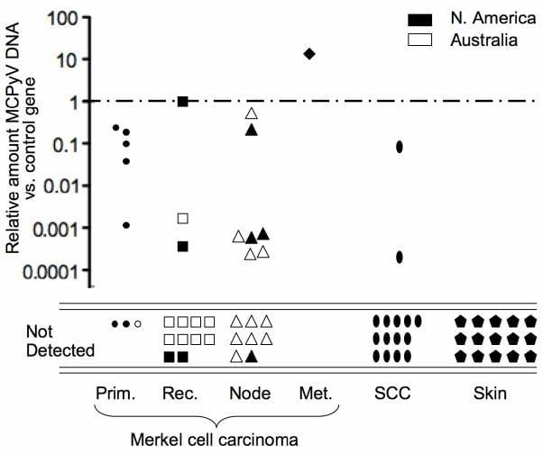 Figure 2 - Marked variability of Merkel cell polyomavirus DNA quantity among MCC tumors